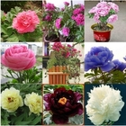 Chinese Blue Green White Black Pink Red Peony Flower Seeds /1 Pack 20 Seeds 6 Color Total 120 Seeds IZ0011